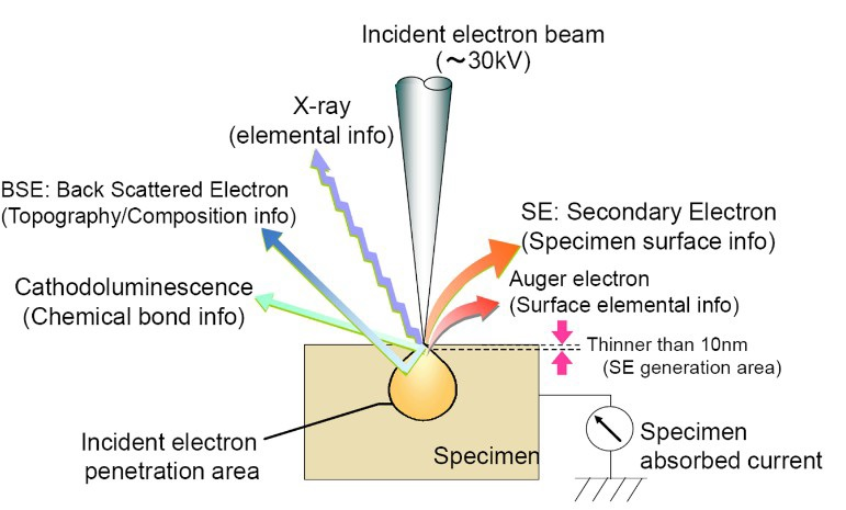 Typical interactions and signals in SEM