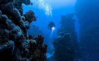 The Environmental Risks of Deep Seabed Mining